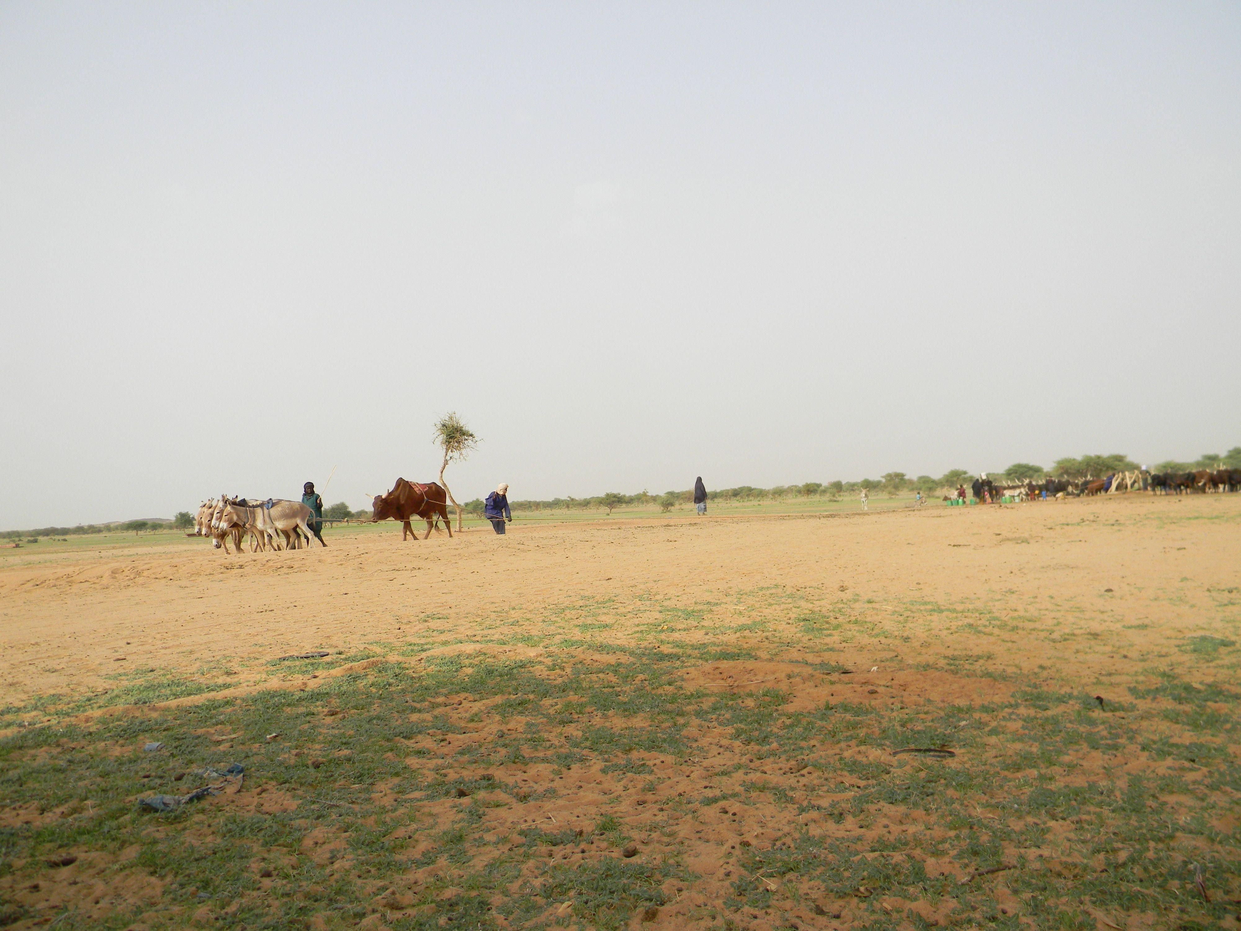 puits ânes et bufles tirent