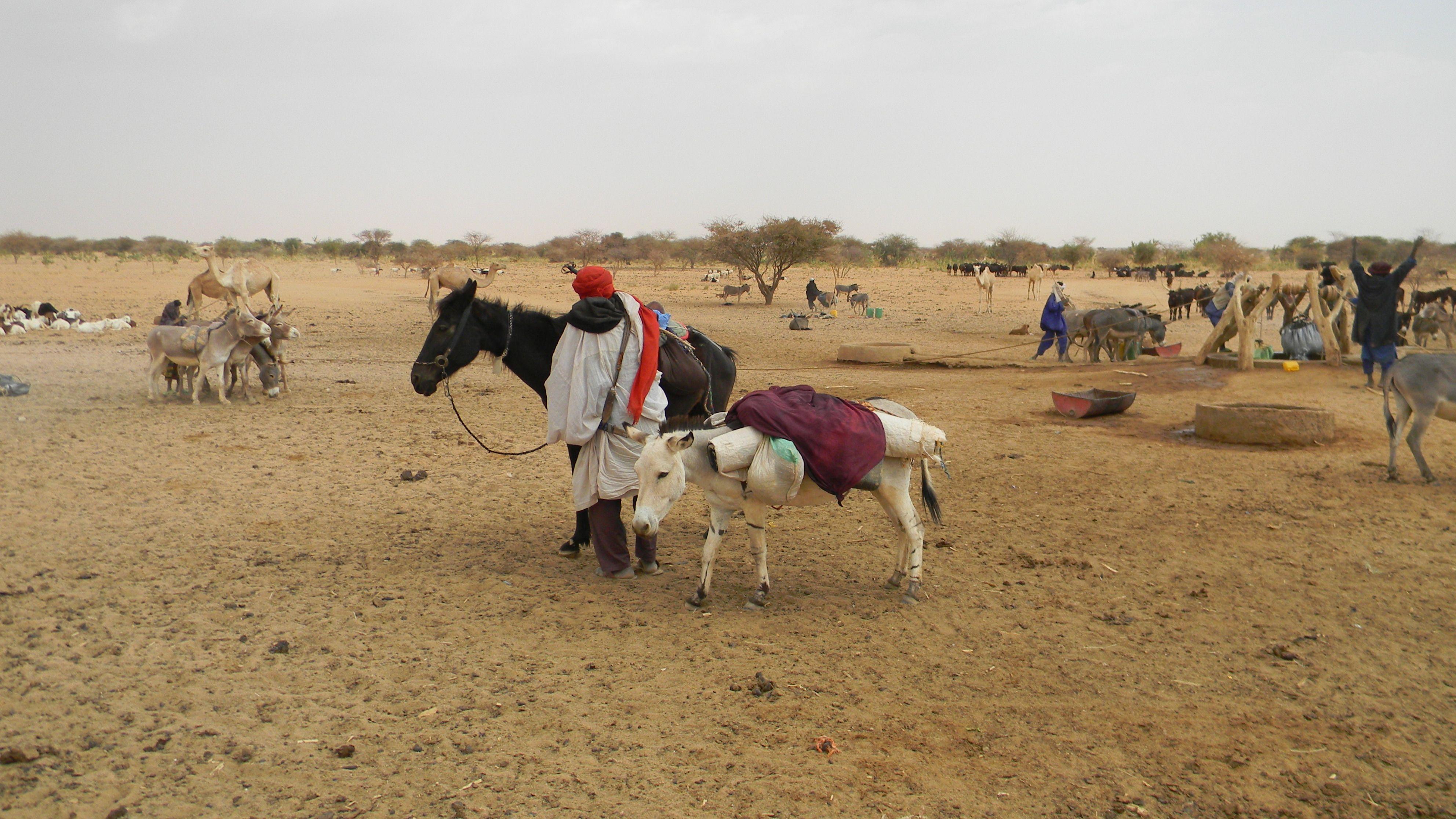 puits äne et cheval tirent